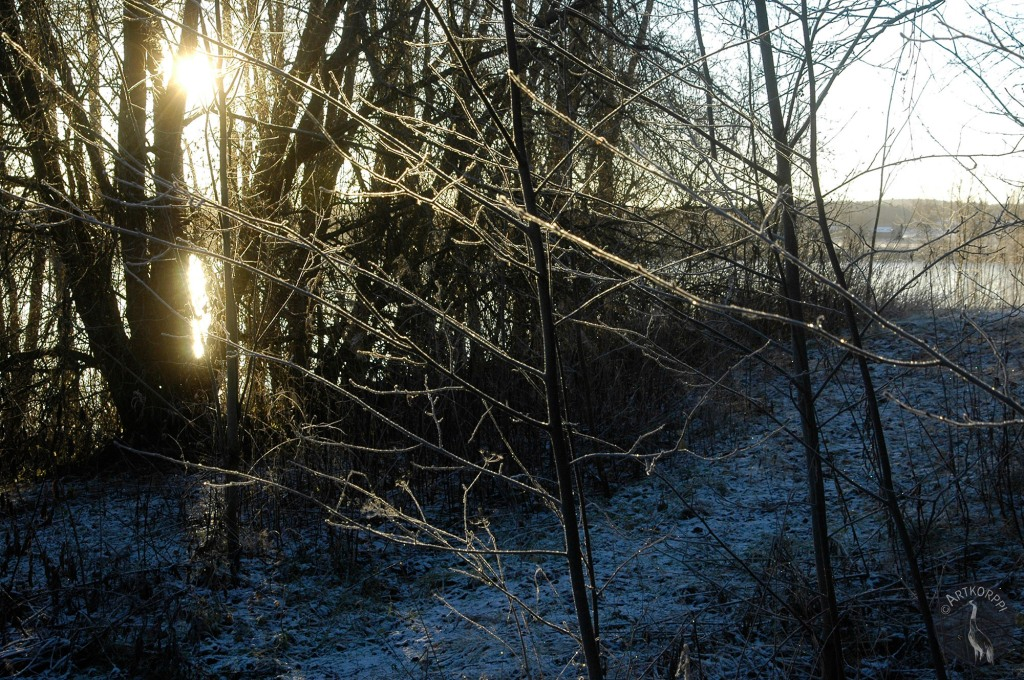 sun and branches