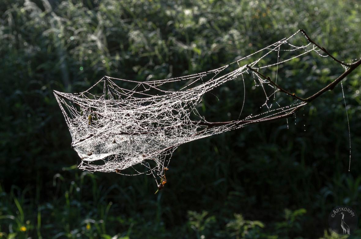 spider_room_0077