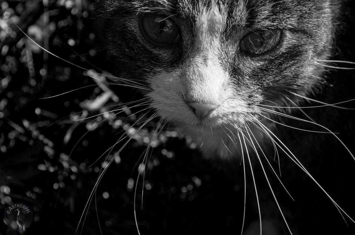 CAT_muok_mv2_0169p