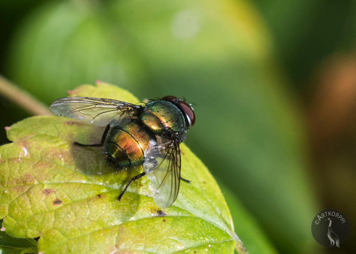fly_0046p