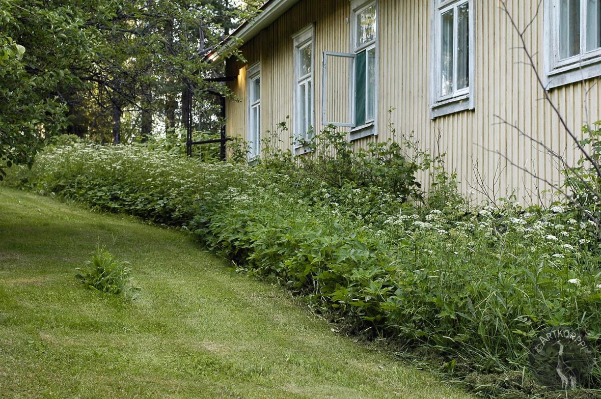backyard3154