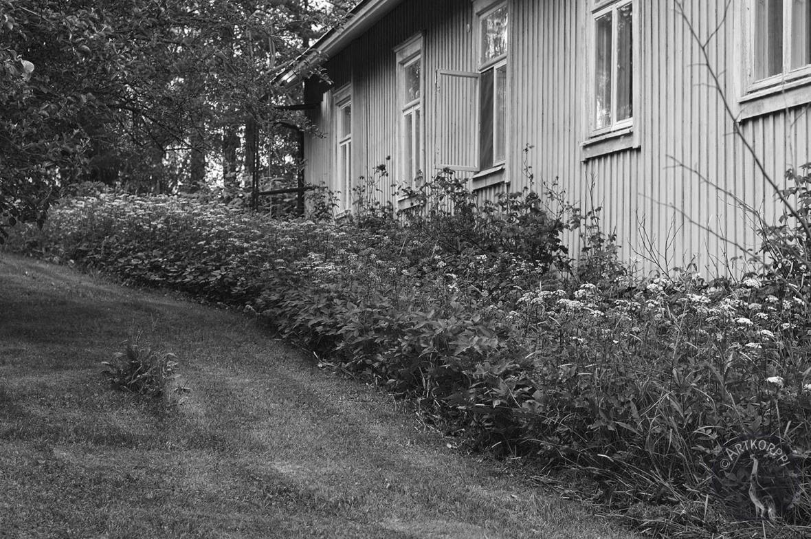 backyard3154mv