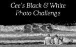 black_white_banner_logo