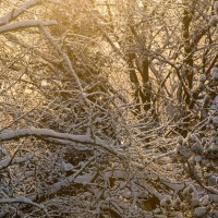 Talvipäivä / A Winter Day / 4