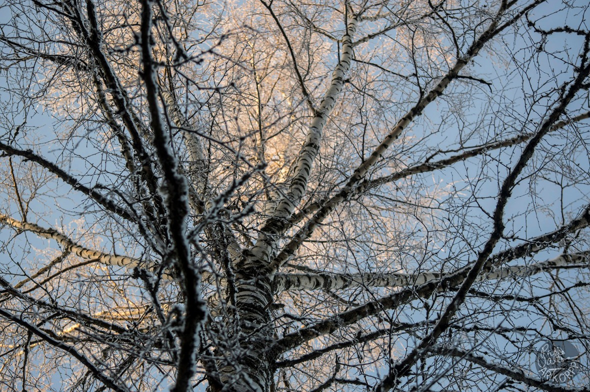 winterday__0116p