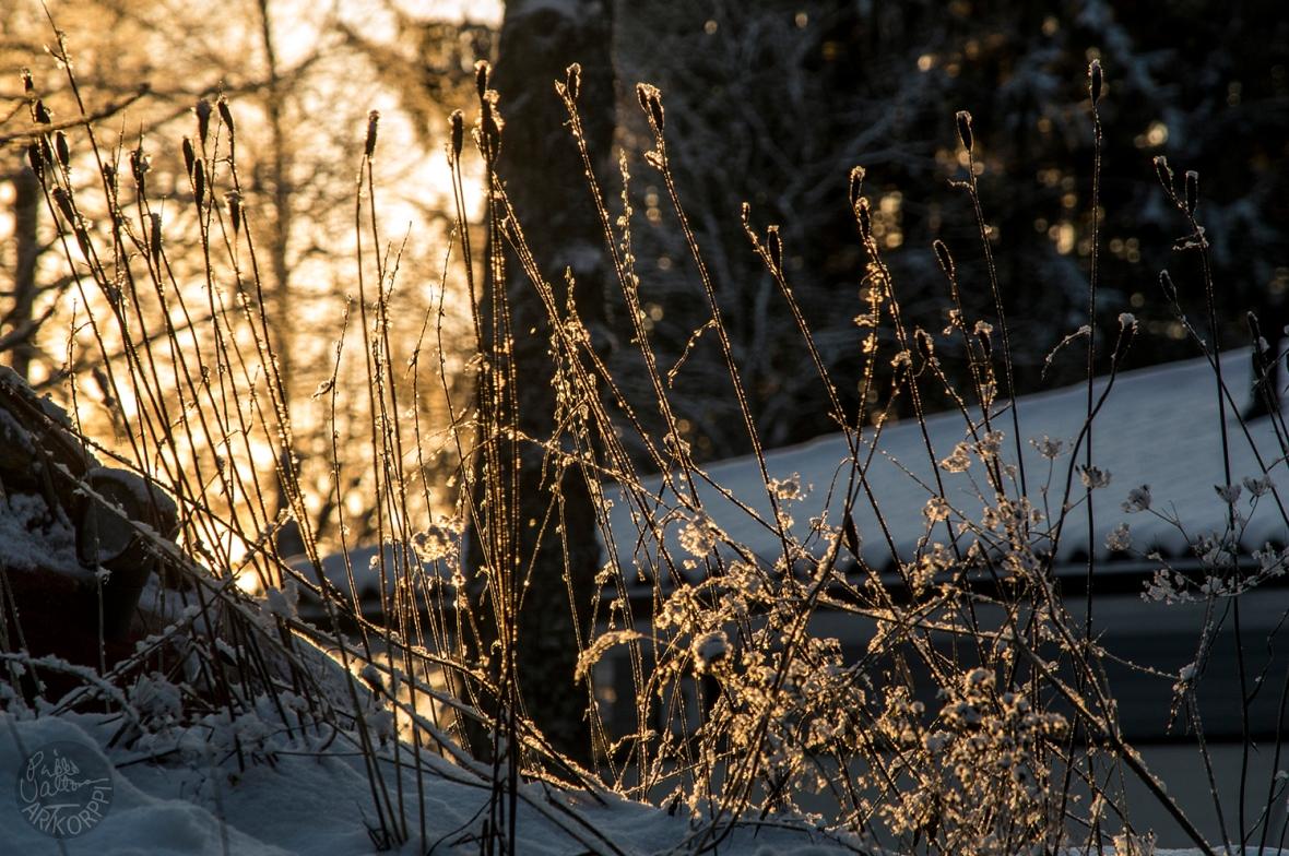 winterday__0150p