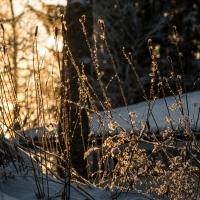 Talvipäivä / A Winter Day / 3